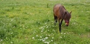 hästkött i Helsingborg